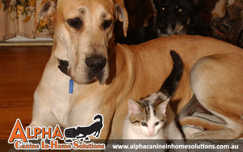 Alpha Canine In-Home Solutions