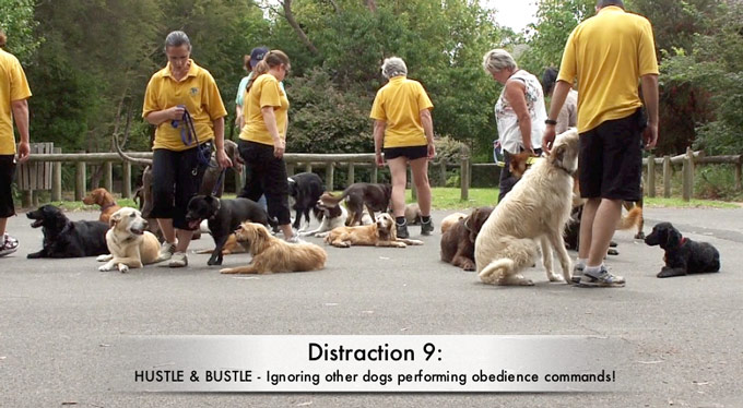 Distraction 9: Hustle and Bustle